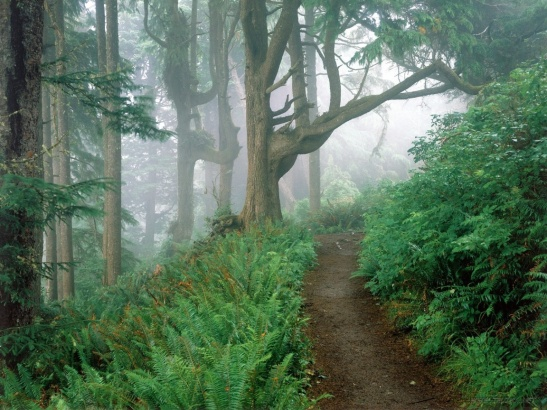 path_in_the_woods-1152x864
